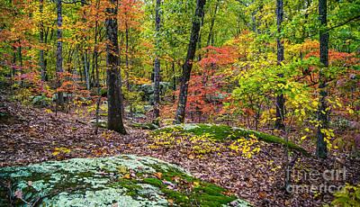 Photograph - Hopscotch Through Autumn's Glory by Julie Clements