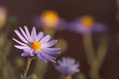 Purple Flowers Digital Art - Horay Spine Aster by Neal Hebert