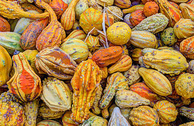 Photograph - Hordes Of Gourds by Heidi Smith