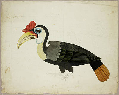 Hornbill Wall Art - Photograph - Hornbill by British Library