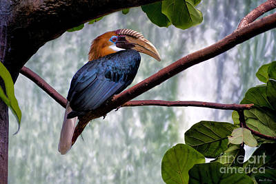 Photograph - Hornbill In Paradise by Adam Olsen