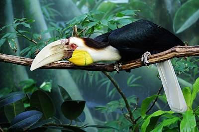 Hornbill Digital Art - Hornbill by Paulette Thomas