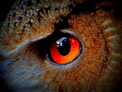 Horned Owl Eye Art Print