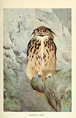 Audubon Painting - Horned Owl by Philip Ralley