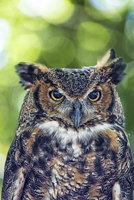Horned Owl Up Close Art Print