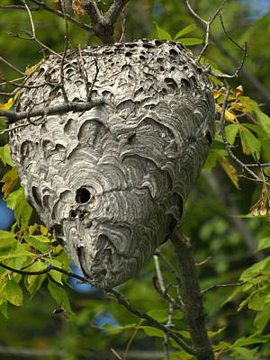 Hornet Nest Original by James Peterson