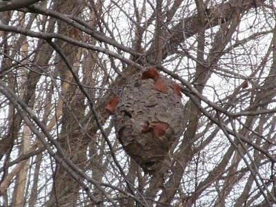 Hornets Nest East Art Print