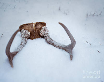 Rabbit Hunting Photograph - Horns In The Snow by Sonja Quintero