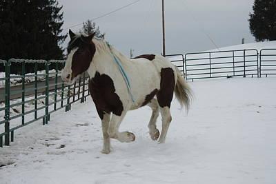 Photograph - Horse 03 by David Yocum