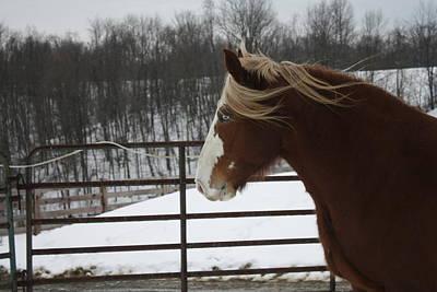 Photograph - Horse 09 by David Yocum