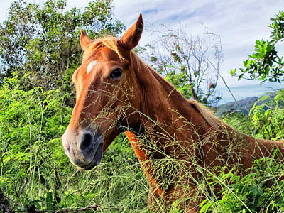 Photograph - Horse 1 by Dawn Eshelman