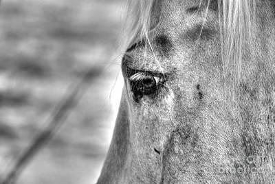 Horse 1 Art Print by Jimmy Ostgard