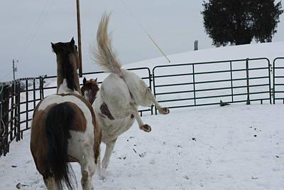 Photograph - Horse 13 by David Yocum