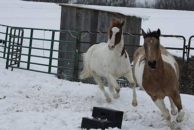 Photograph - Horse 14 by David Yocum