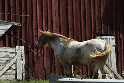 Photograph - Horse 16 by David Yocum