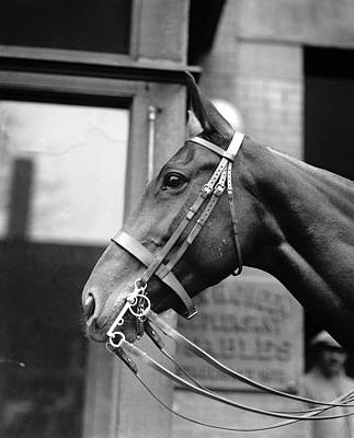 Horse, 1921 Art Print by Granger