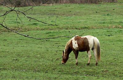 Photograph - Horse 23 by David Yocum