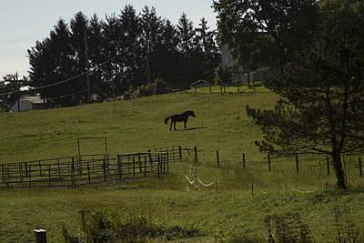Photograph - Horse 28 by David Yocum