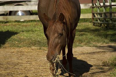 Photograph - Horse 32 by David Yocum
