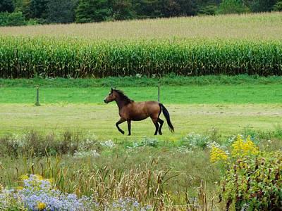 Cornfield Mixed Media - Horse Amidst Many Colors by Sherry Brant
