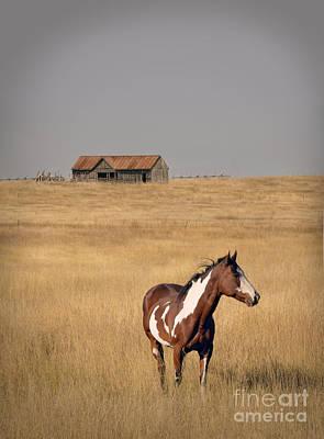 Photograph - Horse And Barn by Jill Battaglia