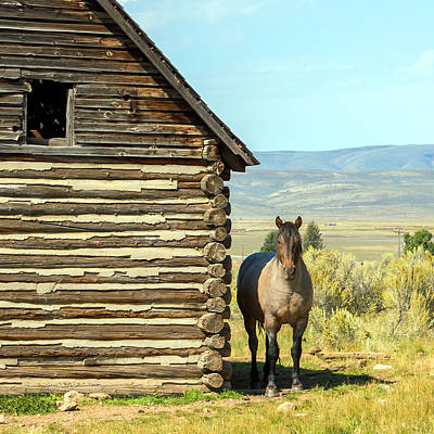 Photograph - Horse And Barn by Nicholas Blackwell