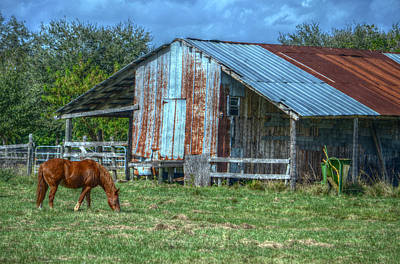 Photograph - Horse And Barn by Ronald T Williams