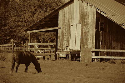 Photograph - Horse And Barn Sepia by Ronald T Williams