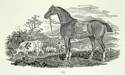 Illustration Technique Photograph - Horse And Cow by British Library