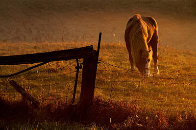 Photograph - Horse And Fence Silhouette by Jim Vance