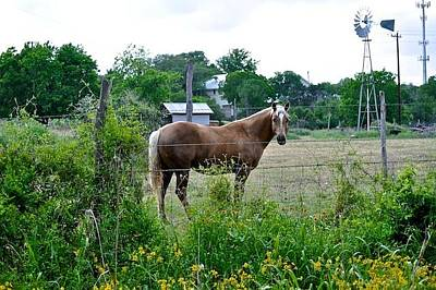 Photograph - Country Horse by Kristina Deane
