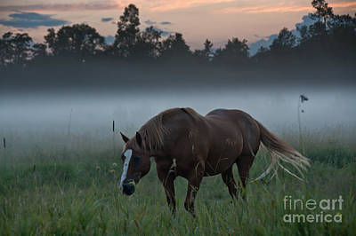 Photograph - Horse And Fog by Cheryl Baxter