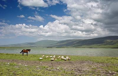 Horse And Geese By Lake Aktas Art Print by Bob Gibbons
