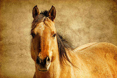 Photograph - Horse And Leather by Steve McKinzie