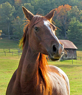 Photograph - Horse And Old Barn 2 In Etowah by Duane McCullough