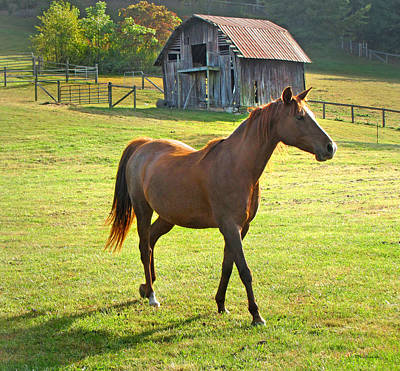 Photograph - Horse And Old Barn In Etowah by Duane McCullough