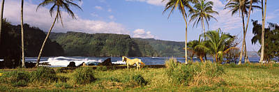 Horse And Palm Trees On The Coast Art Print by Panoramic Images