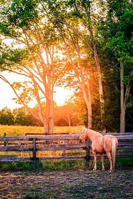 Kentucky Photograph - Horse And Sunset by Alexey Stiop