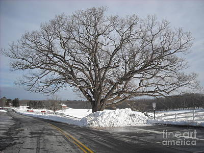 Photograph - Horse Barn Hill In Winter by Michelle Welles