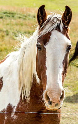 Photograph - Horse Beauty by Teri Virbickis