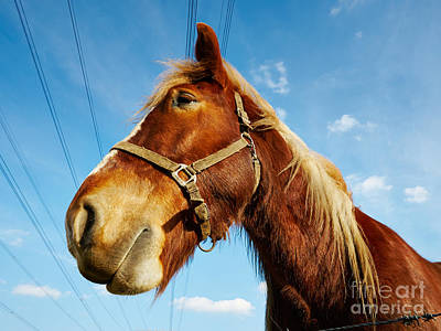 Photograph - Horse Behind A Barbed Wire by Nick  Biemans