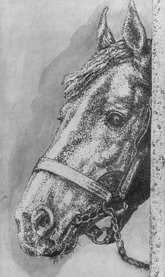Drawing - Horse  by Bryan Bustard