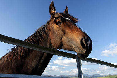 Photograph - Horse By The Gate by Aidan Moran