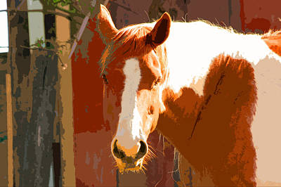 Photograph - Horse by Carol McCarty