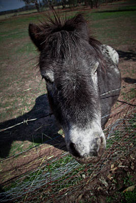 Photograph - Horse by Carole Hinding