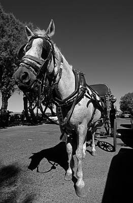 B Photograph - Horse Carriage by George Atsametakis