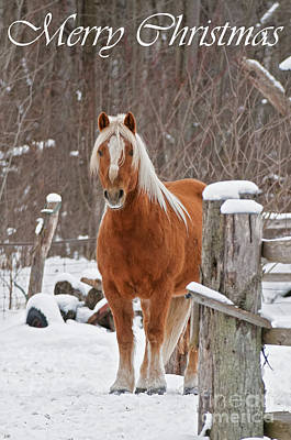Photograph - Horse Christmas Card 1 by Michael Cummings