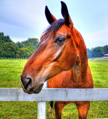 Photograph - Horse Closeup by Jonny D