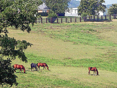Photograph - Horse Country by Aimee L Maher Photography and Art Visit ALMGallerydotcom
