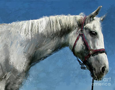 Painting - Horse  by Daliana Pacuraru